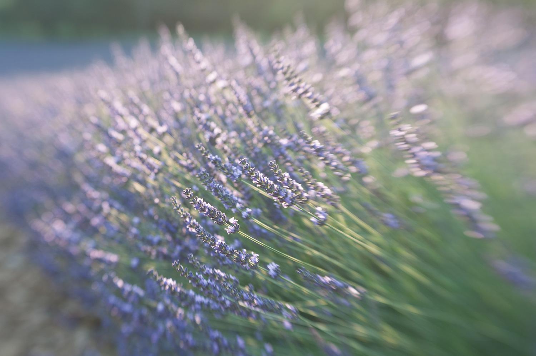 objectsaroundtheworld.com_lavender_other_colour_15.jpg