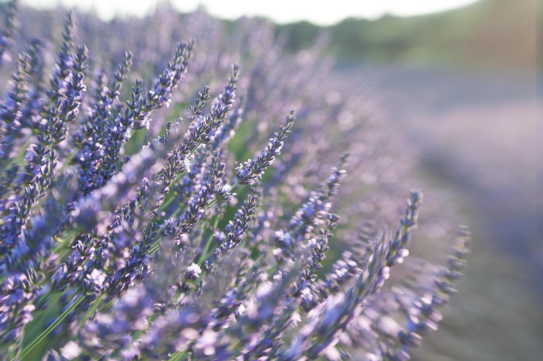 objectsaroundtheworld.com_lavender_other_colour_14.jpg