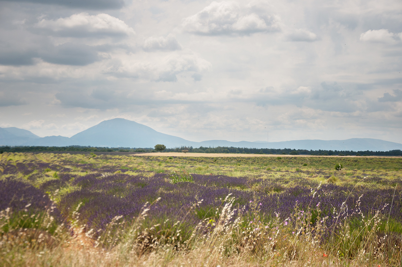 objectsaroundtheworld.com_lavender_other_colour_16.jpg