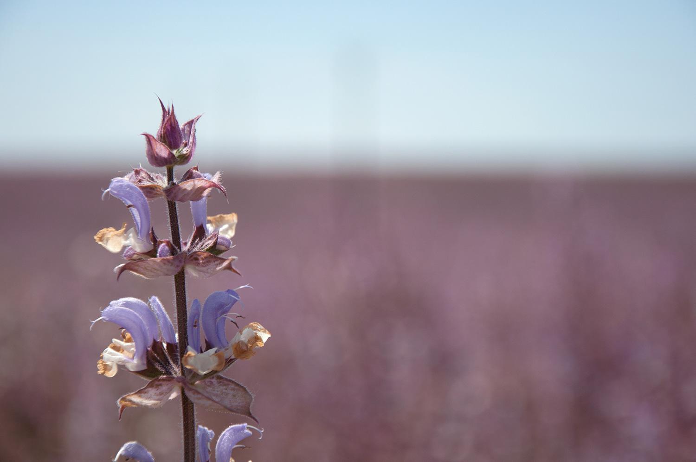 objectsaroundtheworld.com_lavender_other_colour_21.jpg