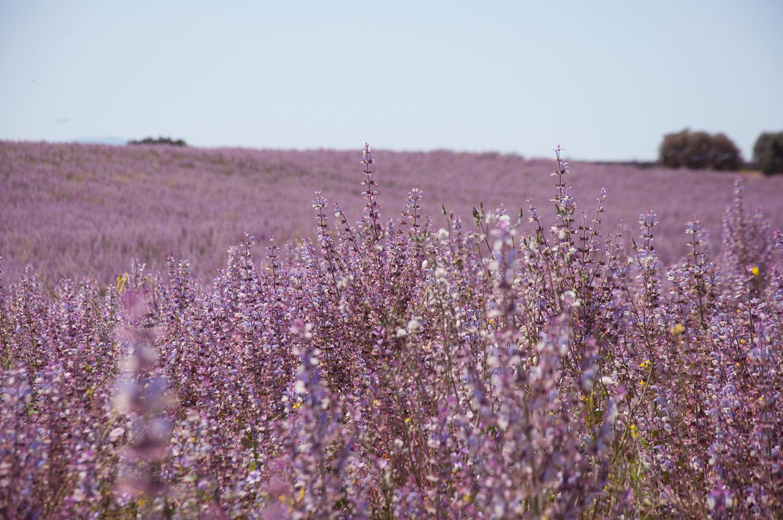 objectsaroundtheworld.com_lavender_other_colour_20.jpg