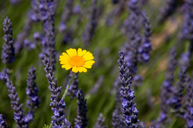 objectsaroundtheworld.com_lavender_other_colour_27.jpg