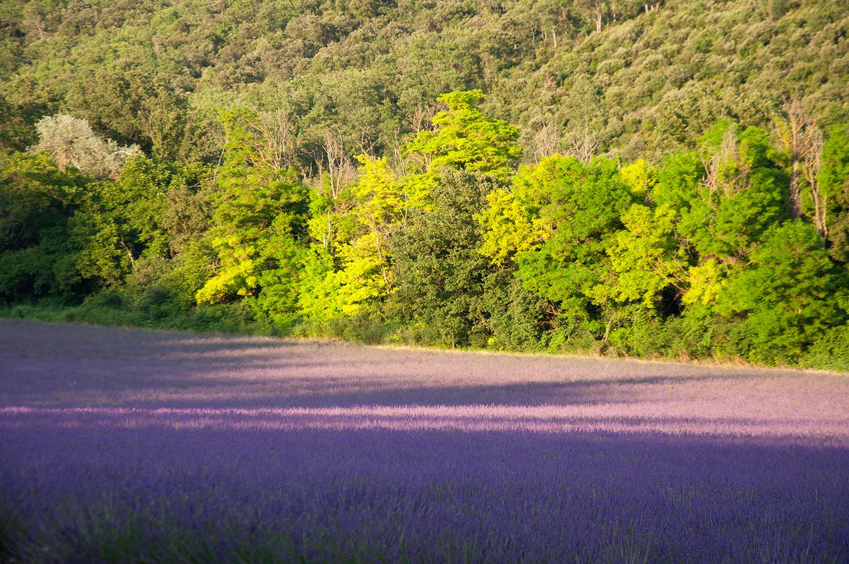 objectsaroundtheworld.com_lavender_other_colour_28.jpg