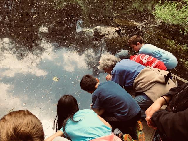 Fourth graders at Mass Audubon Field Trip