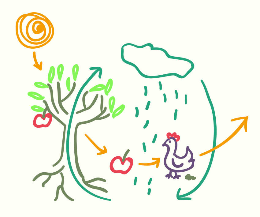Eco-literacy -