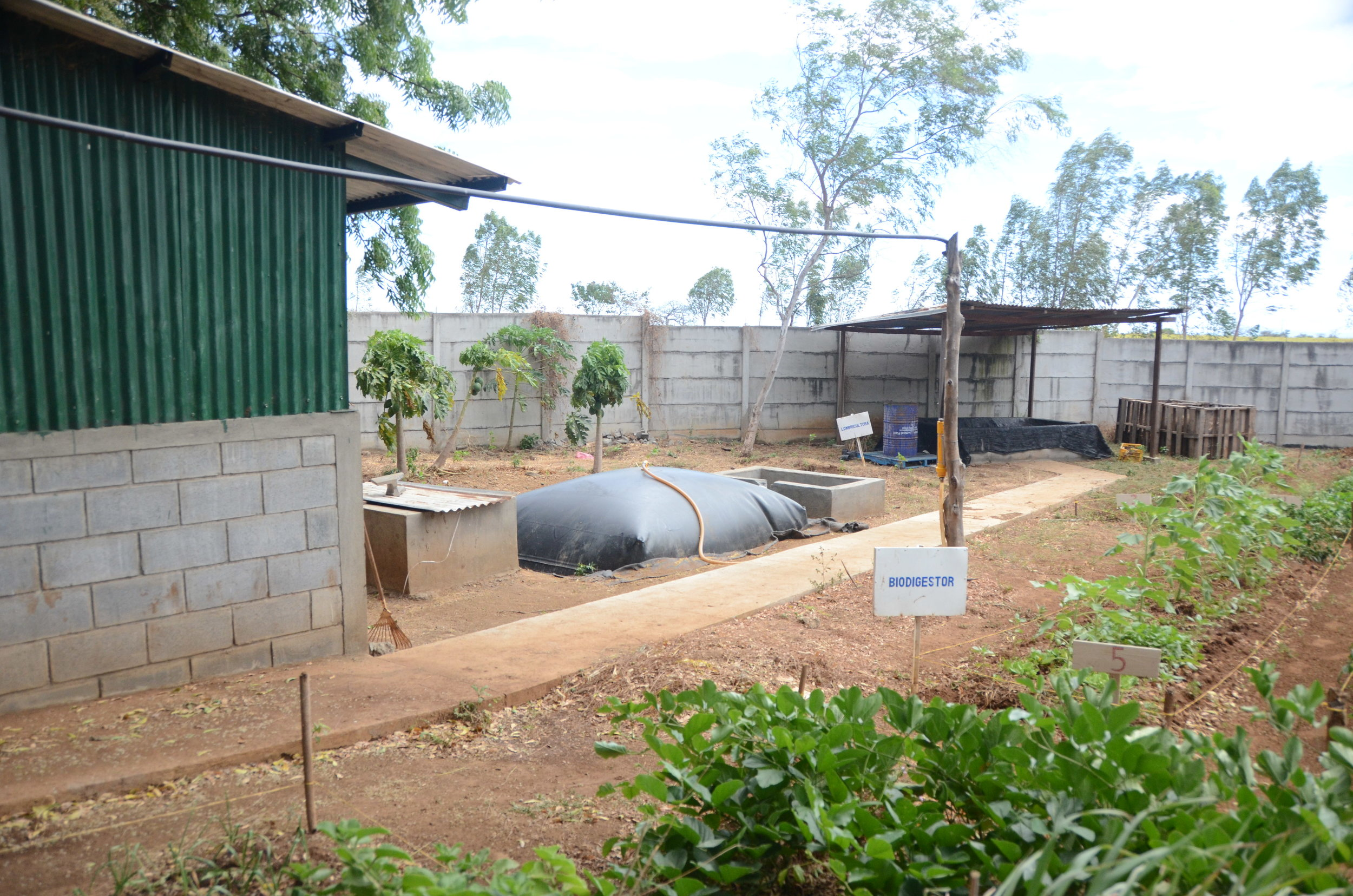 The plants in front here are medicinal, they are the ones used in the lotions. This black bag is full of methane gas. In front of this is a pig pen, the pigs create the gas. The hose connects to the kitchen and powers the stove.