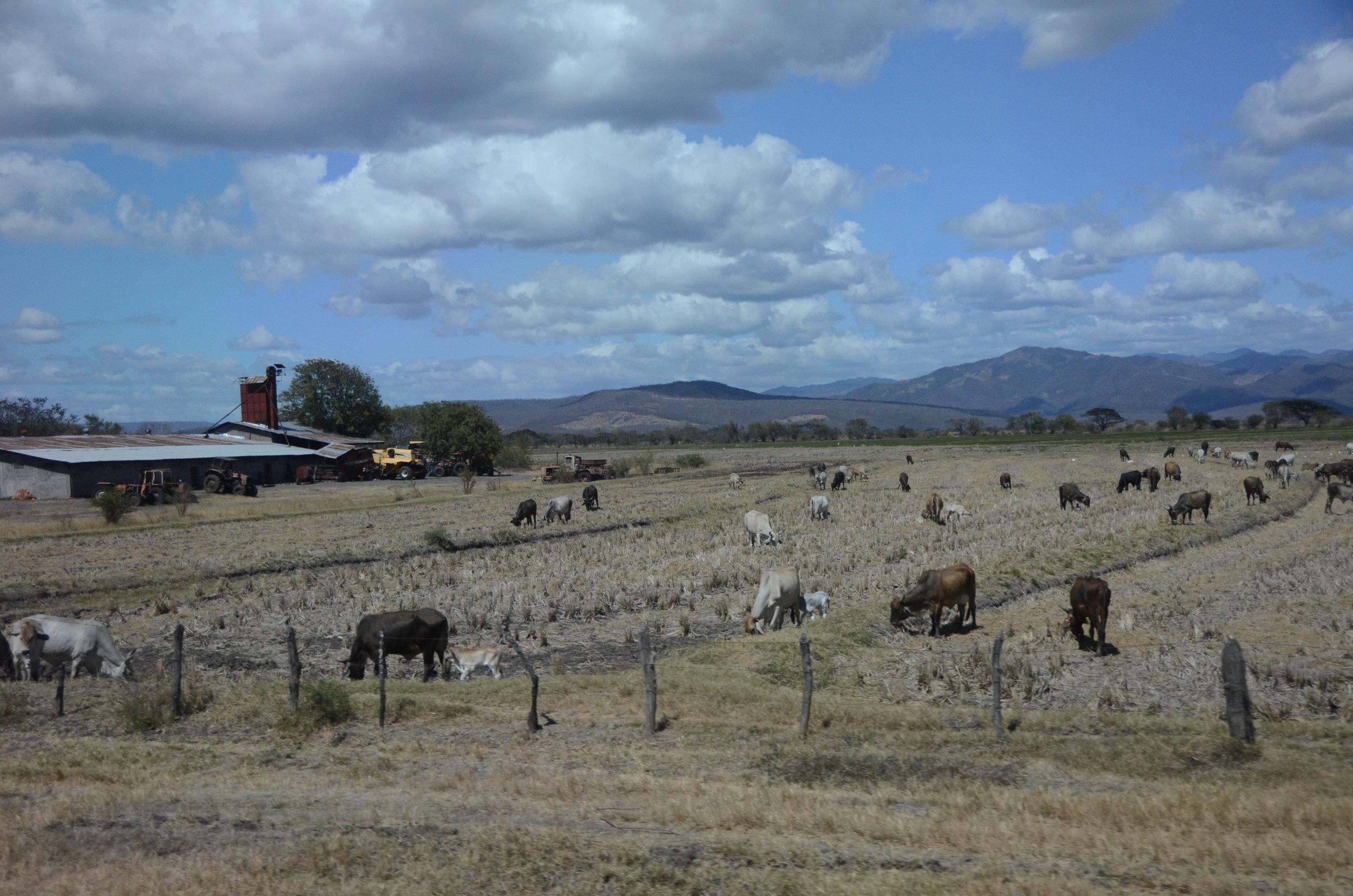 Cattle farm I think?