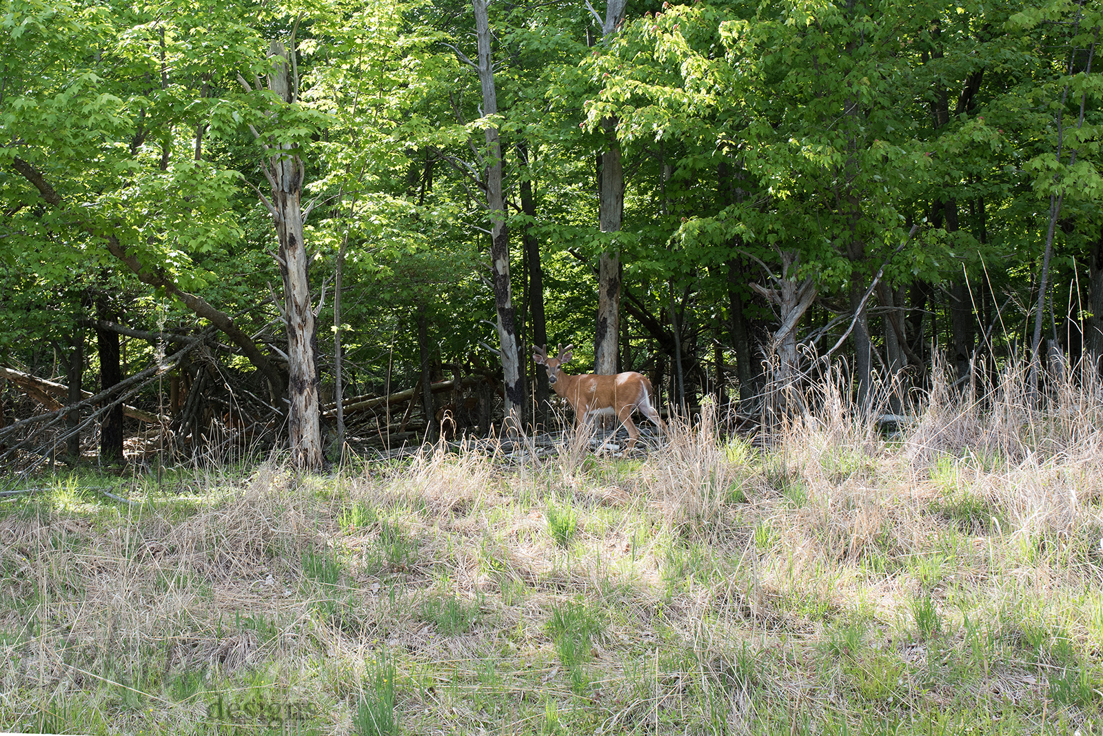 This is with my 50 mm lens! This buck was just begging for a photo.