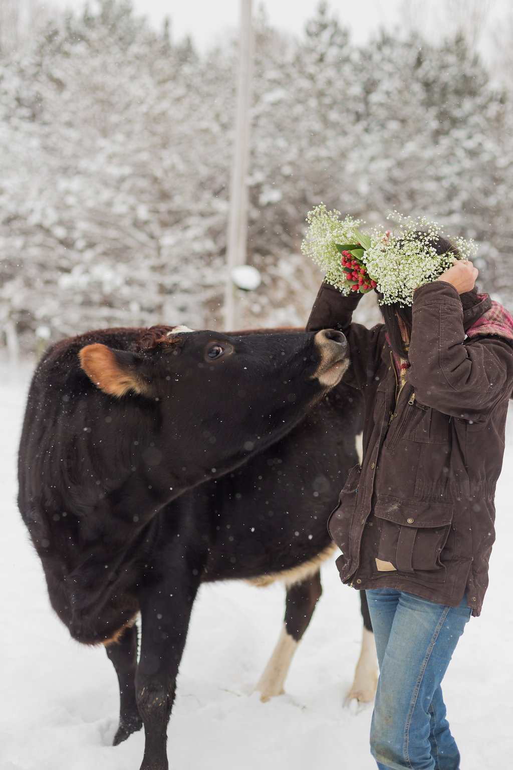 Toula. - In December 2015, Toula, a 6 month cow, was being sold on a Facebook group as though she were a commodity, she was being sold as a feeder cow. Pina couldn't erase her face from her mind, specially when she visited a place close to her workplace that feeds cattle before sending them to slaughter, their last days before being processed. At the same time, videos of high speed slaughterhouses bumped into Pina's facebook, making impossible to pass the opportunity of saving her life. Like billions of cows around the world, Toula was an innocent victim of the meat and dairy industry. After negotiating with the farmer, she got Toula, the first bovine of the sanctuary, immediately, a connection between Pina and Toula was established. Pina feels a continue sorrow for the victims of the animal industry, she knows Toula is only one in billions.Now a over 3 years old, Toula is a very much loved and respected member of the Fauna family. She adores Pina and her adoptive brother, Benny. We hope she have a long and happy life at the sanctuary and never know anything but good things.