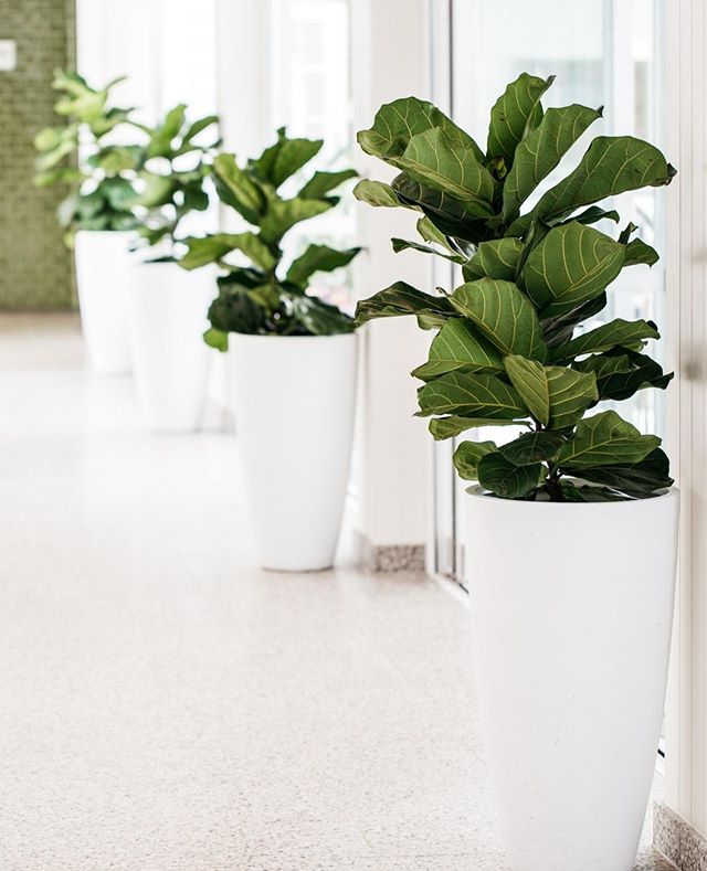 Lush pots of greenery throughout the hotel⁠ #theboathousegroup #theboathousehotelpatonga #hotel #accommodation #centralcoastnsw ⁠ ⁠