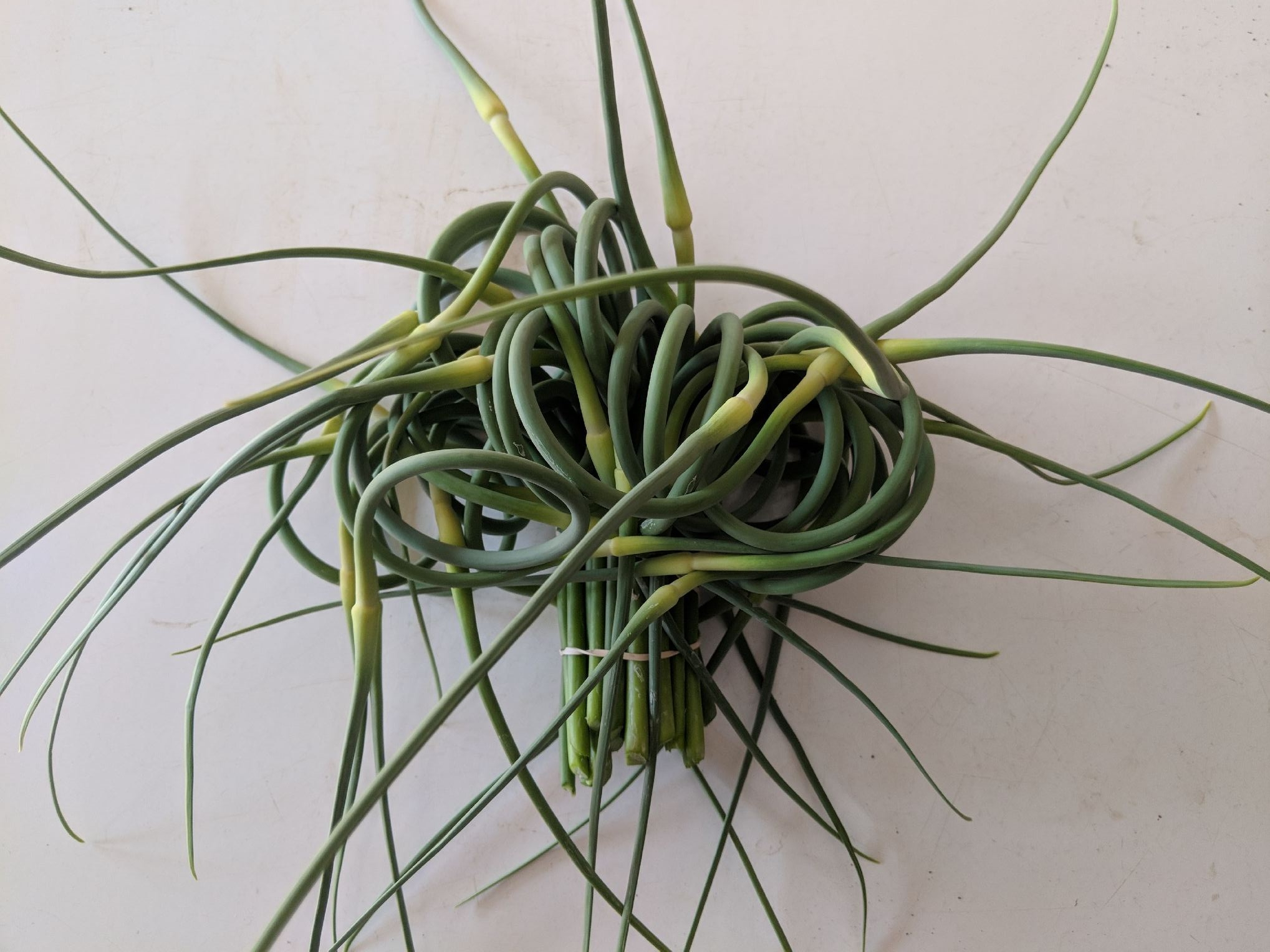 Garlic Scapes curling with whimsy.