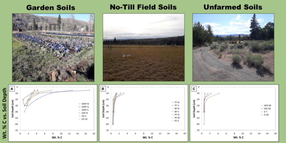 Soil carbon levels in the Spoon Full garden, pasture, and unfarmed wild area.