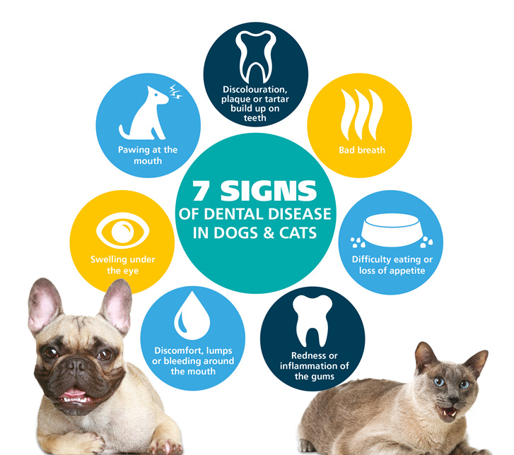 dental_1.jpg