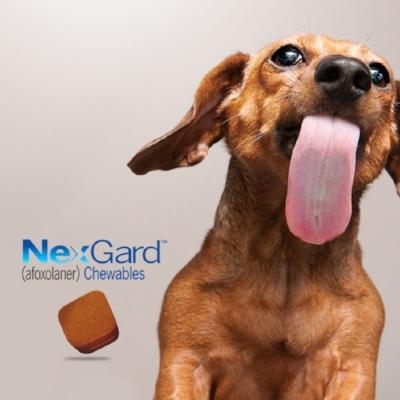 Buy 6 Get 1 Free - Buy 6 months of Nexgard, Get 1 FREE Dose!