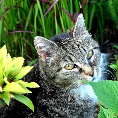 Poisonous Plants -