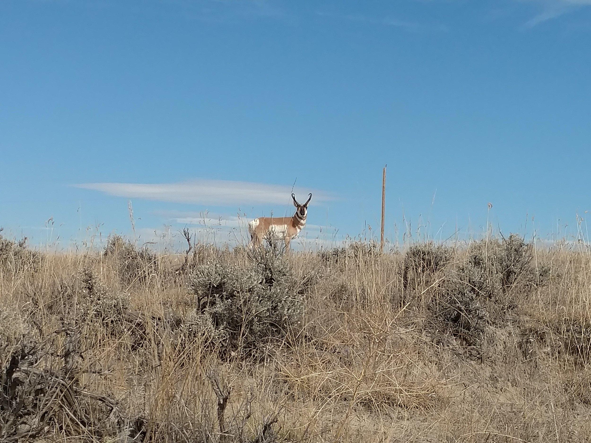 Antelope Recipes -