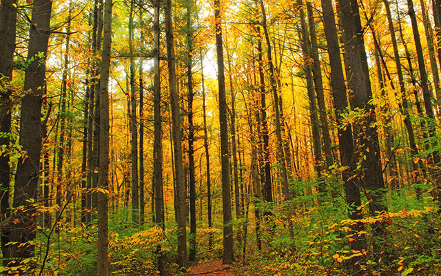 pa-fall-colors-640x400.jpg