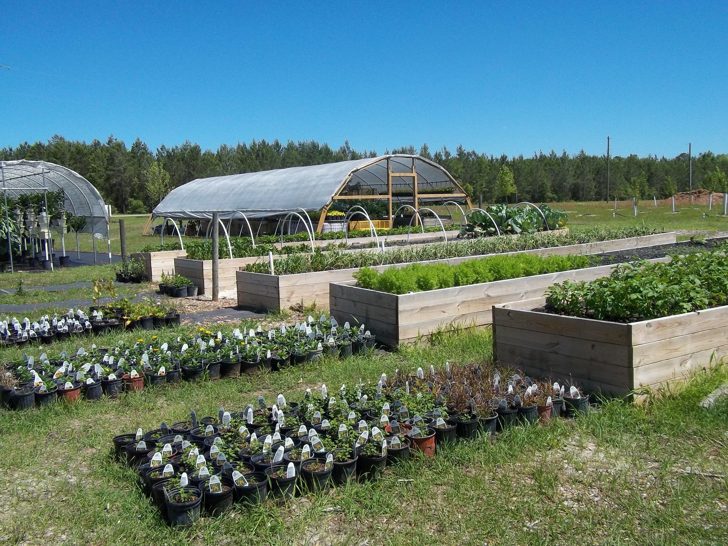 Seamark Farm    Growing Healthy Kids    Learn More