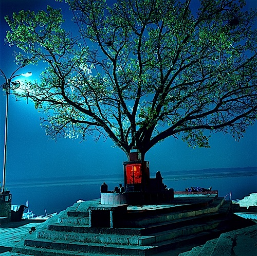 Martin Brading,  Hanuman Shrine Under Peepal Tree, Varanasi , 2001