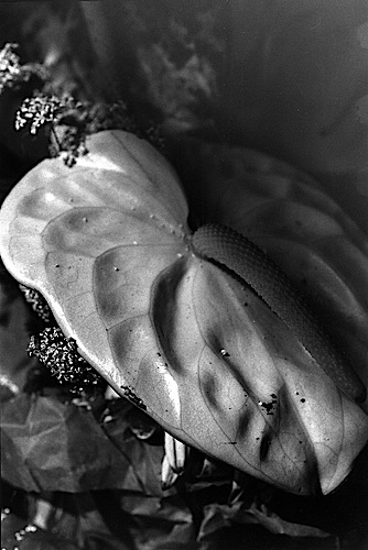 Mother's #21 , 2001, Gelatin Silver Print Mounted Between Plexiglas and Box Construction 11.25 x 7.5""