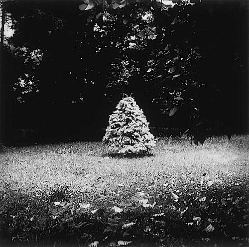 Christmas Tree, Bloomington, Indiana, Winter, Kai Series, 2001