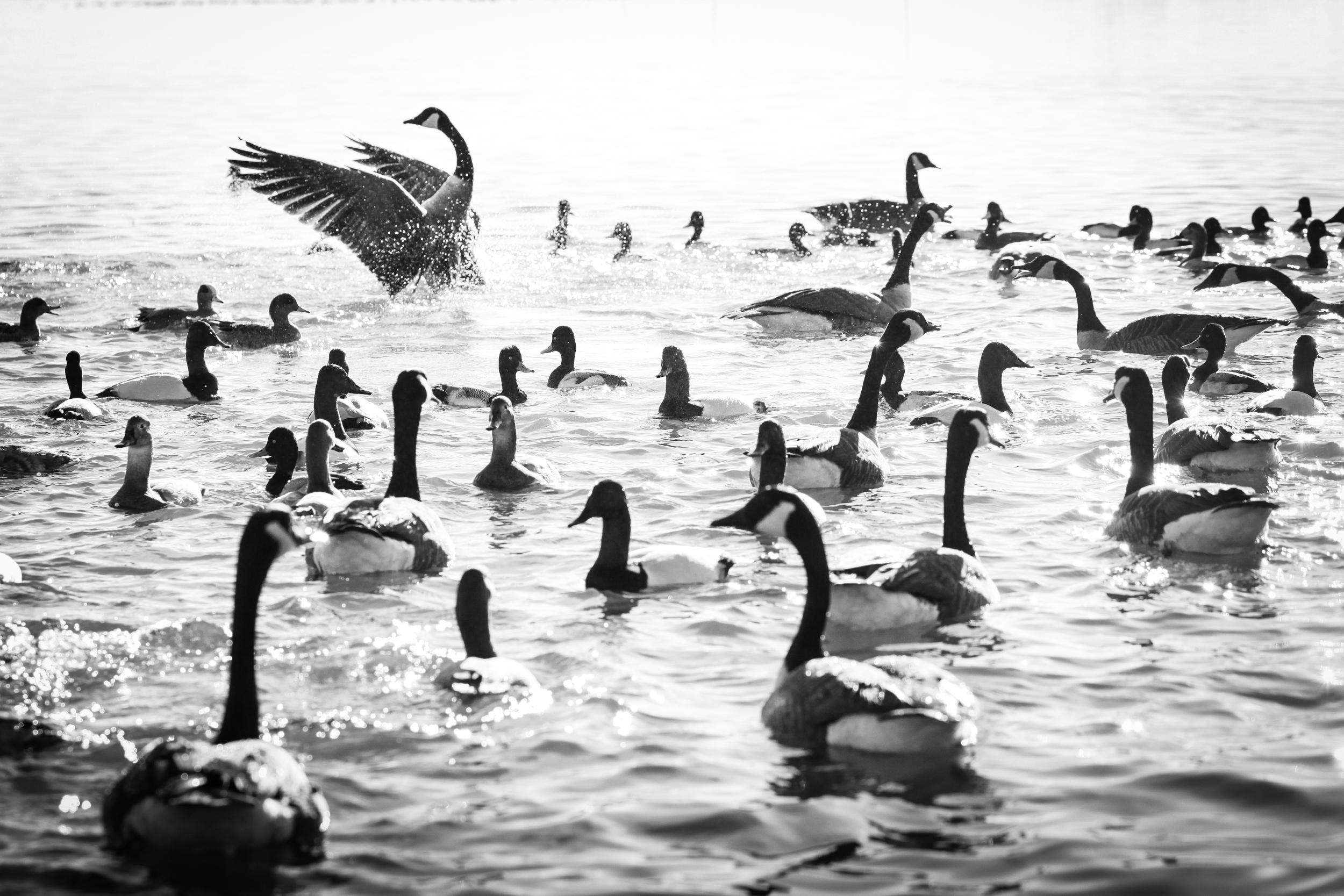 2017-02-Birding-2276.jpg