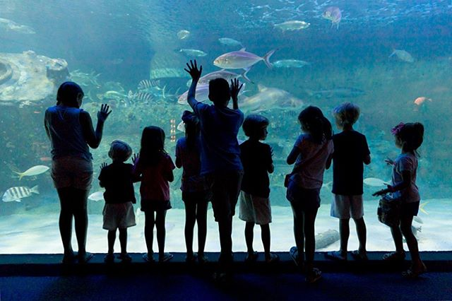 Cousins | North Carolina Aquarium at Pine Knoll Shores | Pine Knoll Shores, NC #aquarium #silhouettes #cousins #family