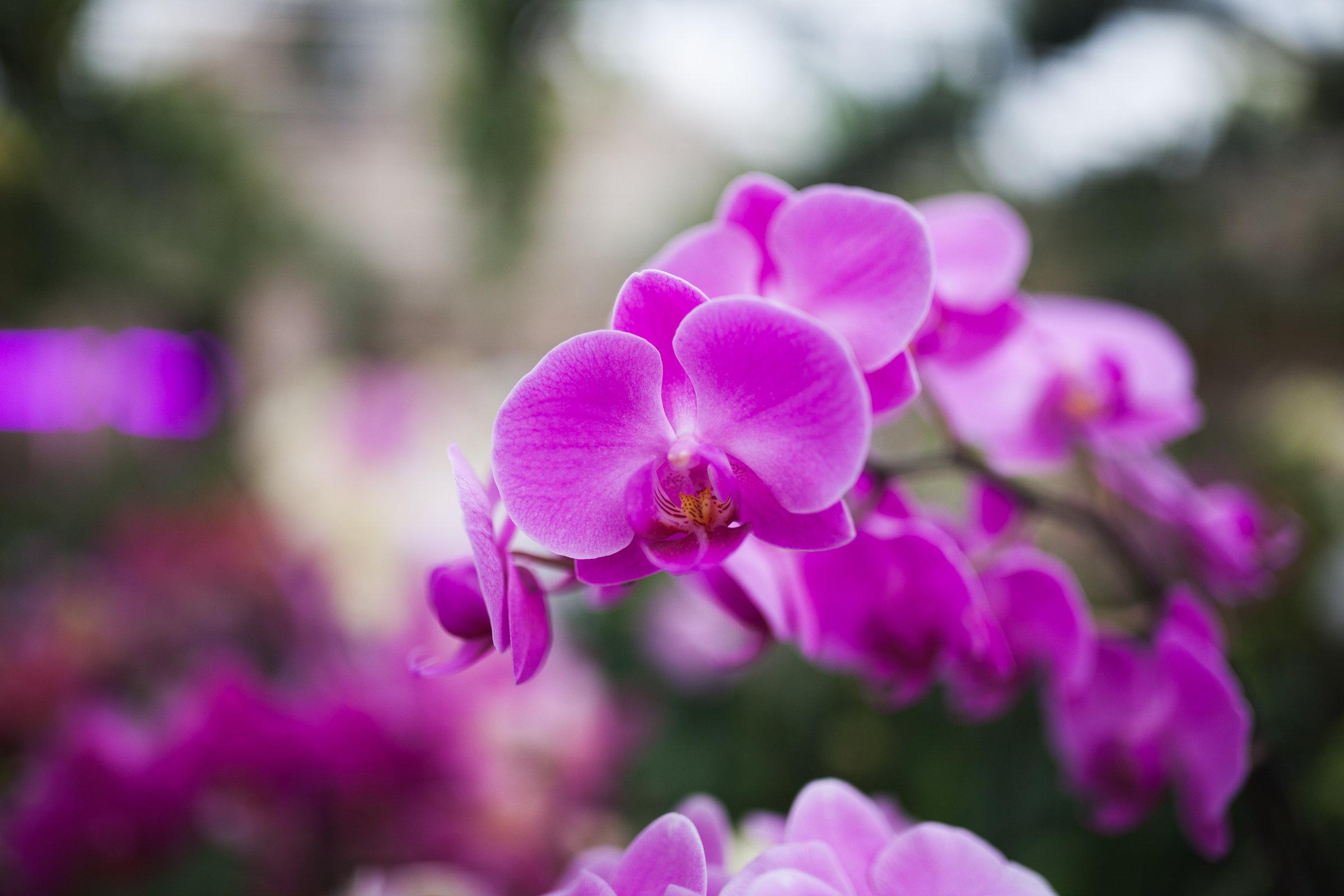 Orchid Farm-Jan-2018-0002.jpg