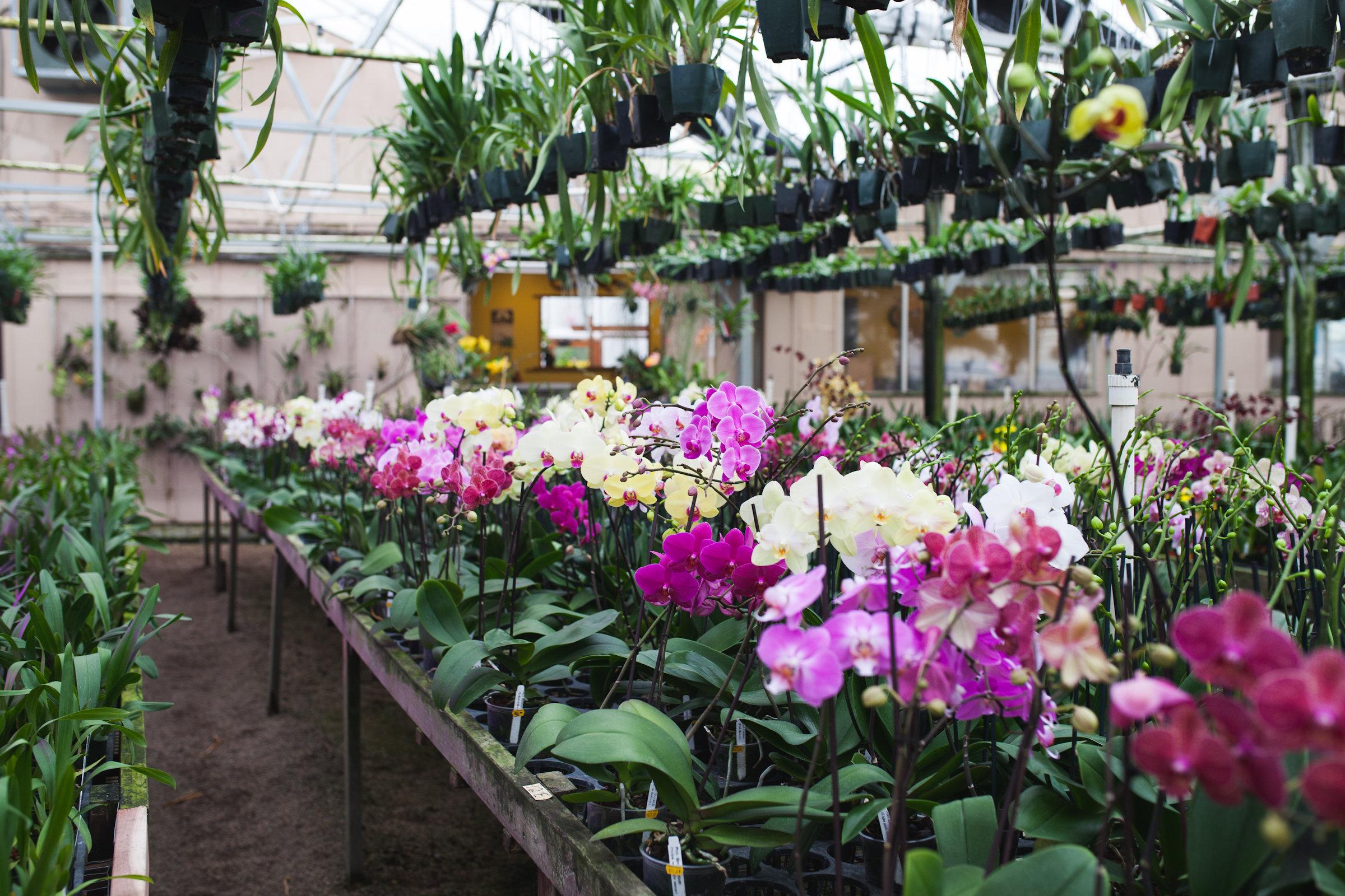 Orchid Farm-Jan-2018-0006.jpg