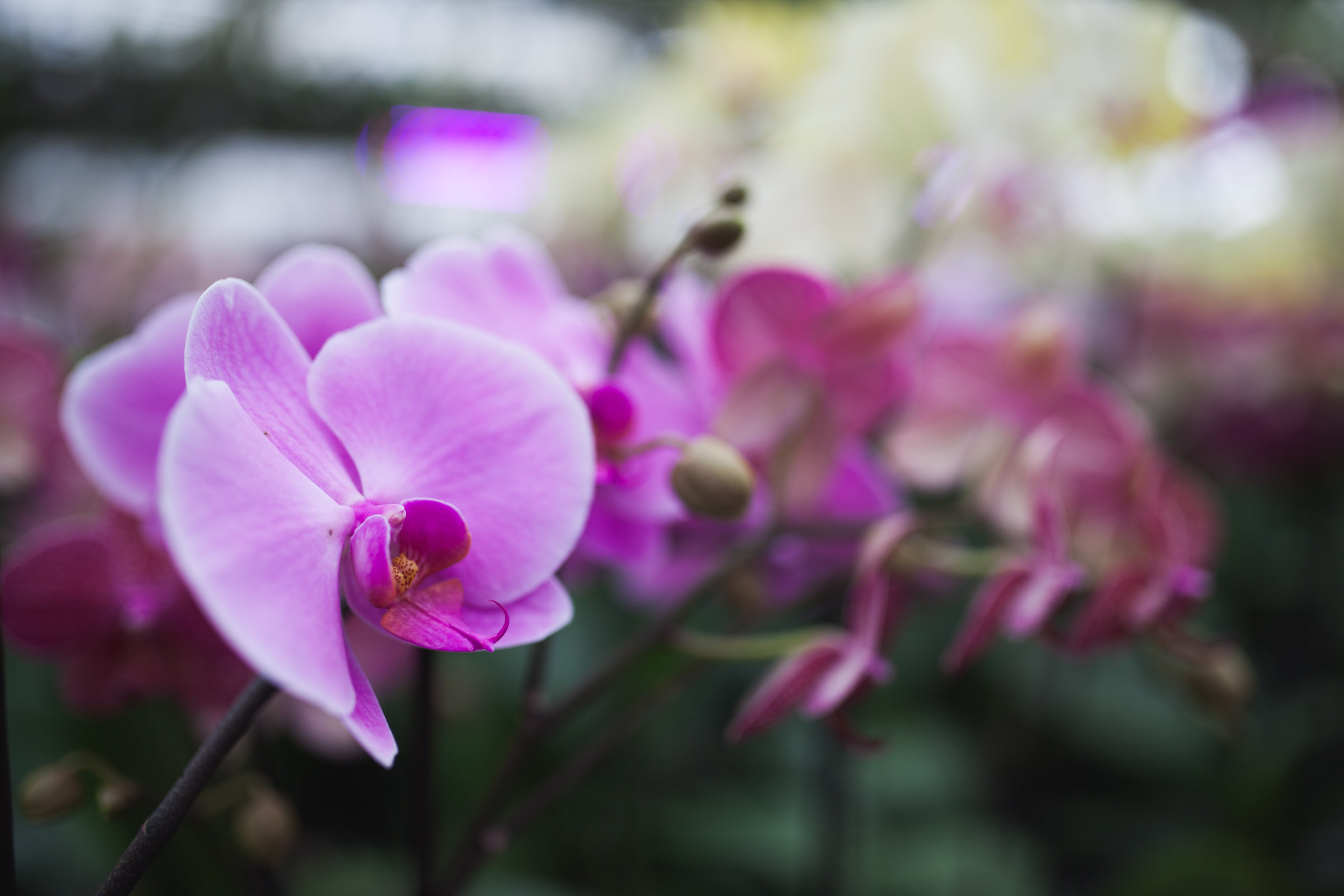 Orchid Farm-Jan-2018-0010.jpg