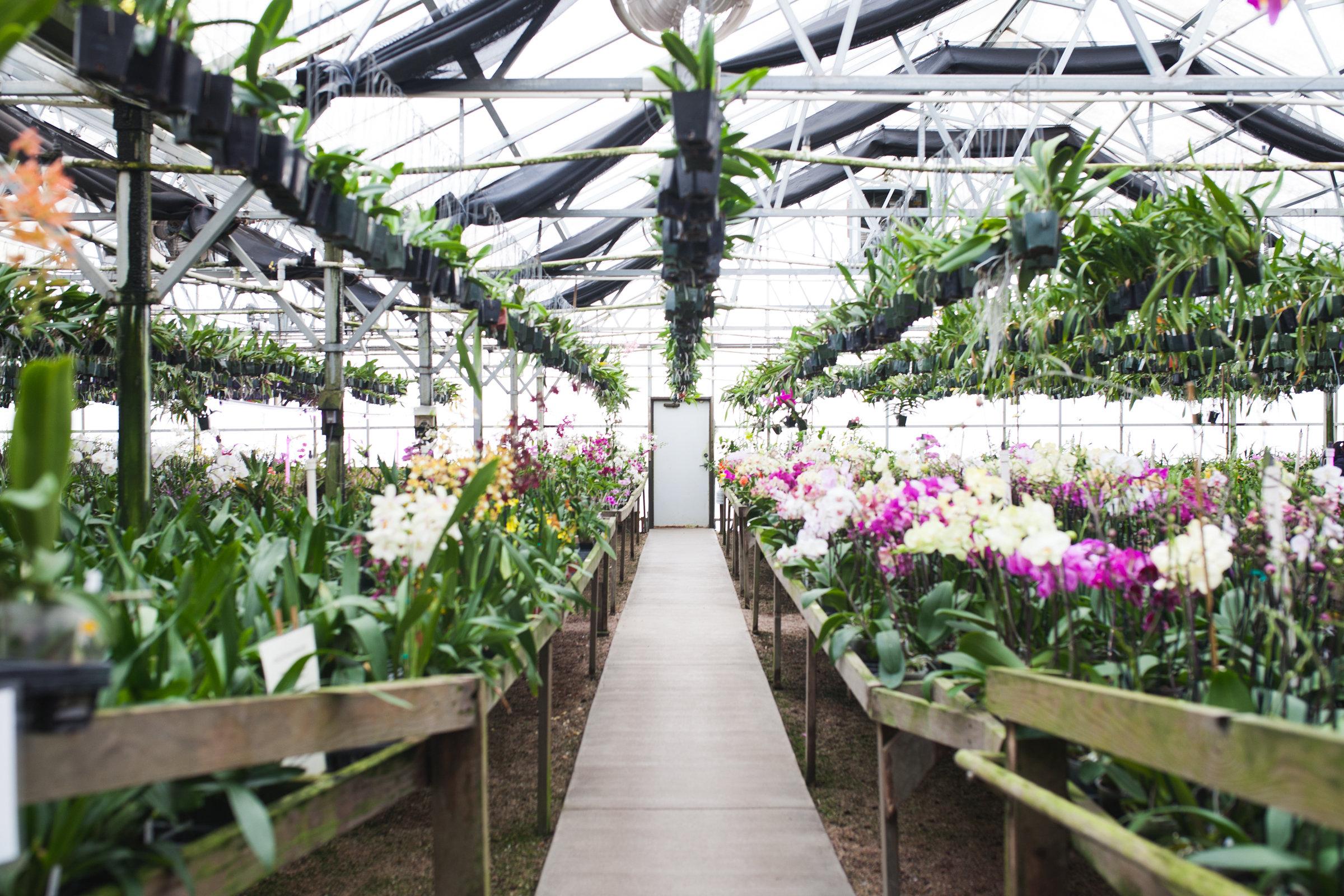 Orchid Farm-Jan-2018-0020.jpg