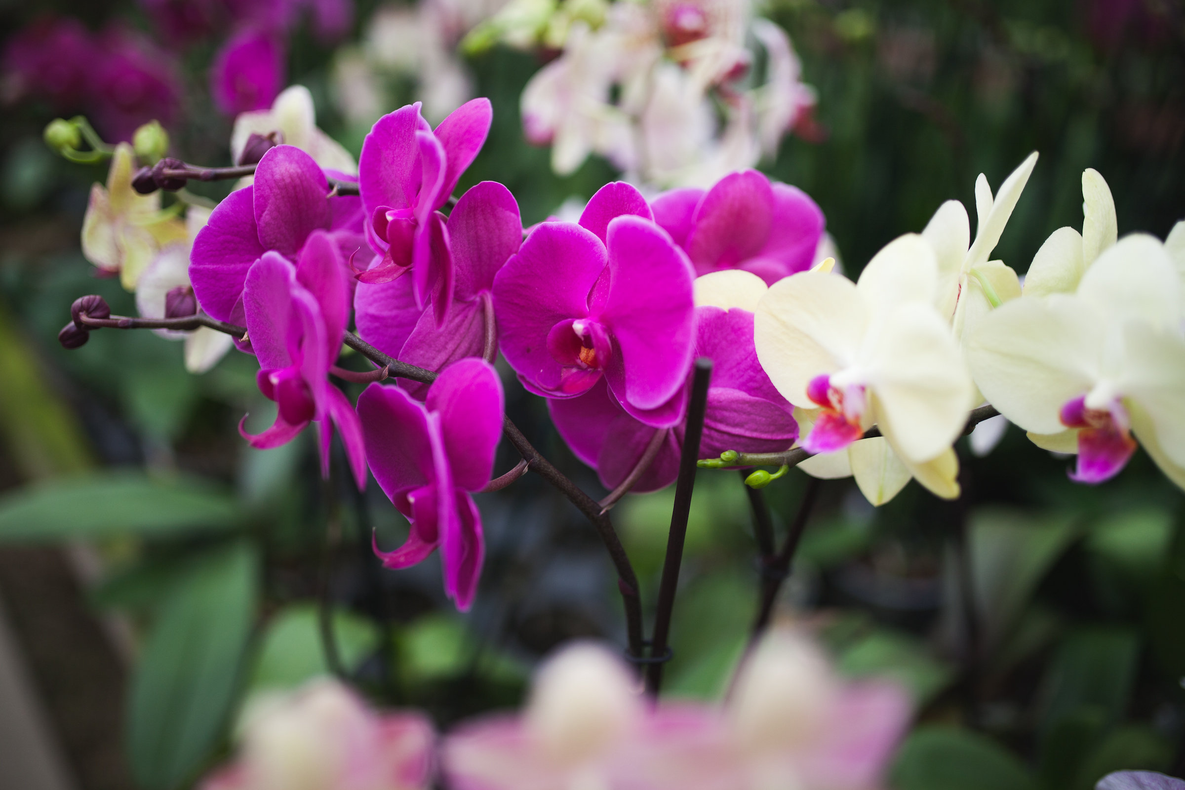 Orchid Farm-Jan-2018-0027.jpg