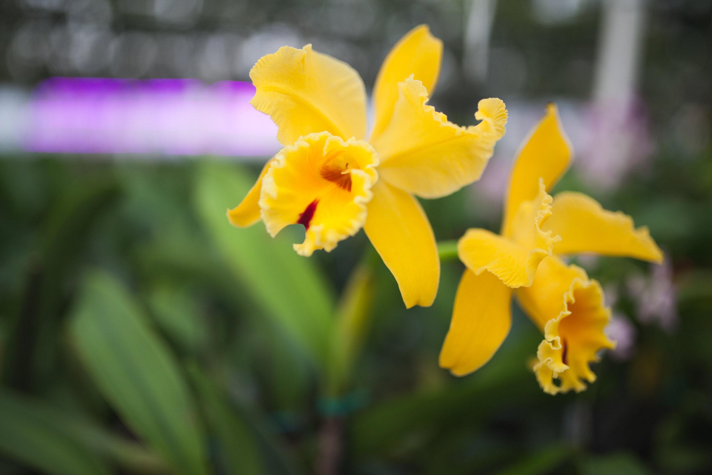 Orchid Farm-Jan-2018-0036.jpg