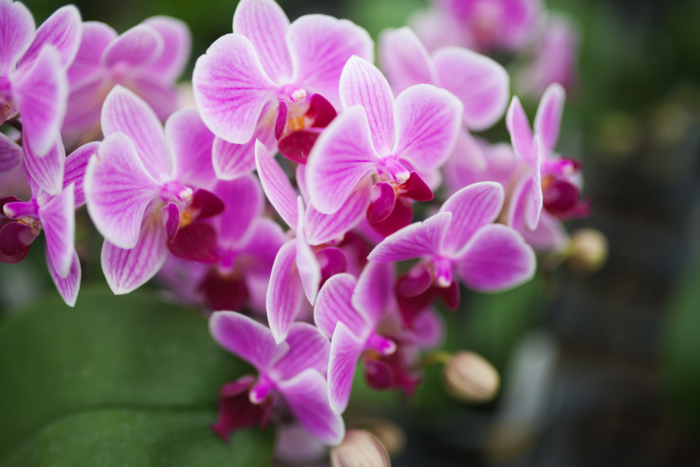 Orchid Farm-Jan-2018-0061.jpg