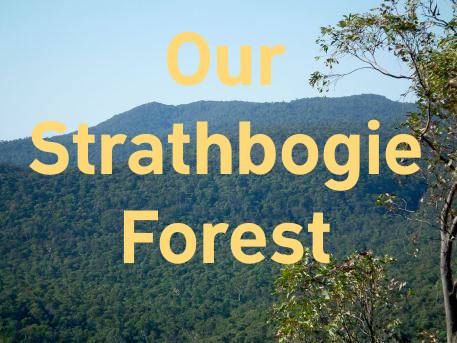 Our Strathbogie Forest   Fighting to protect the forest's last wild places