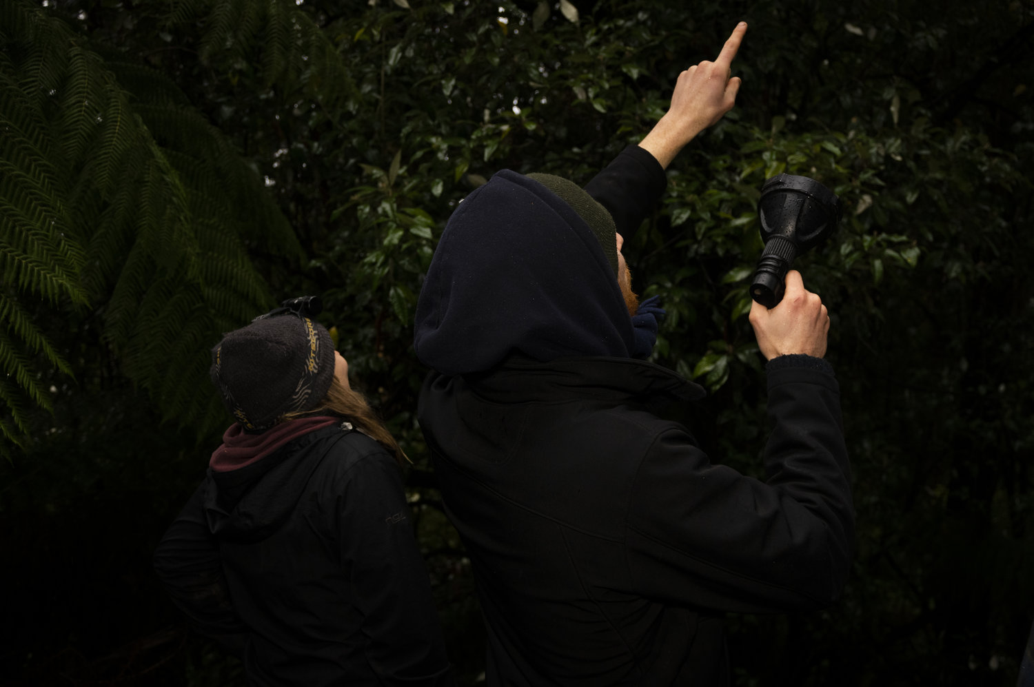 Above: WOTCH surveyors conduct a spotlight survey in the forest.