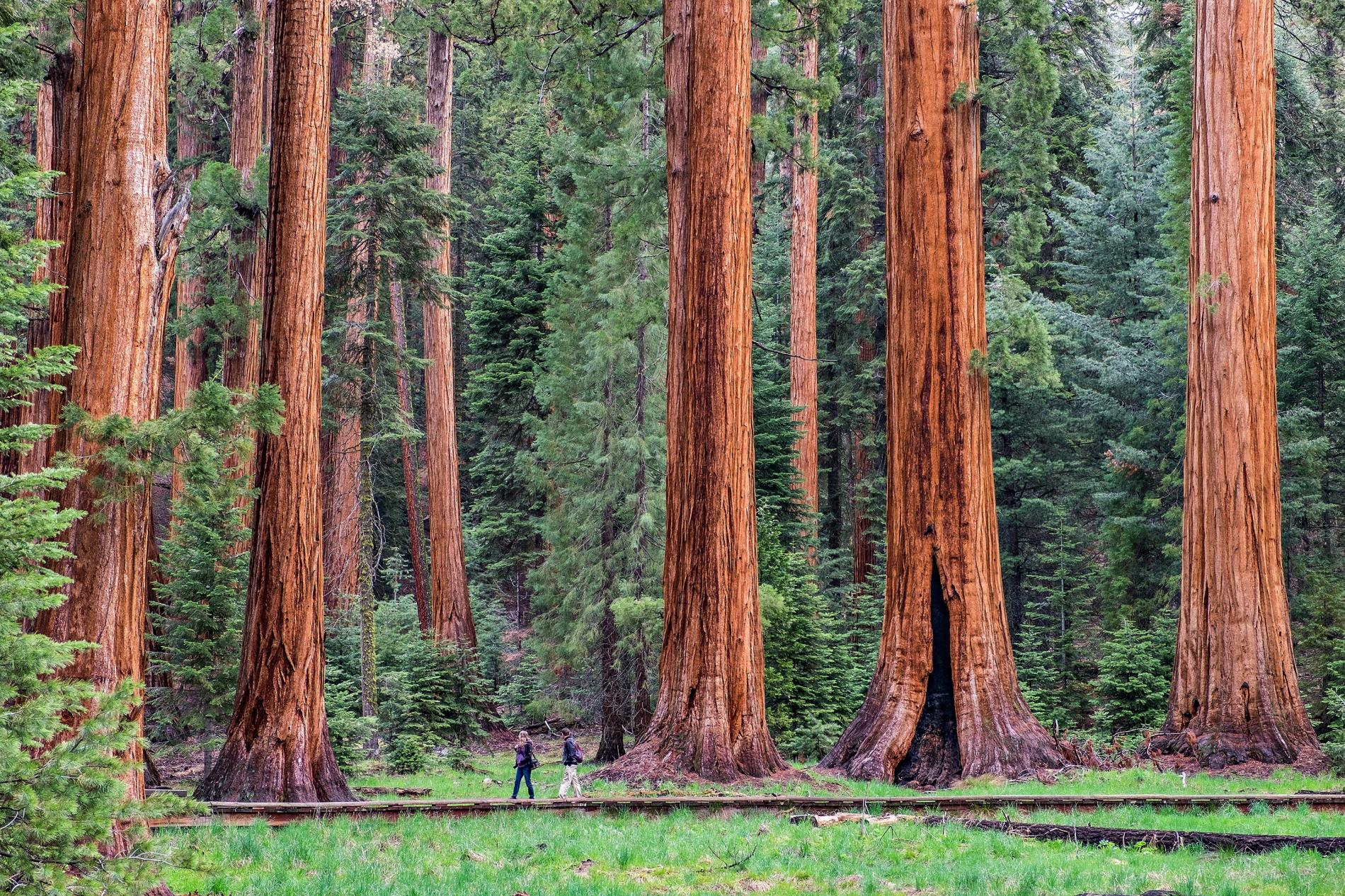 giant-tree-trail-sequoia-national-park.adapt.1900.1.jpg