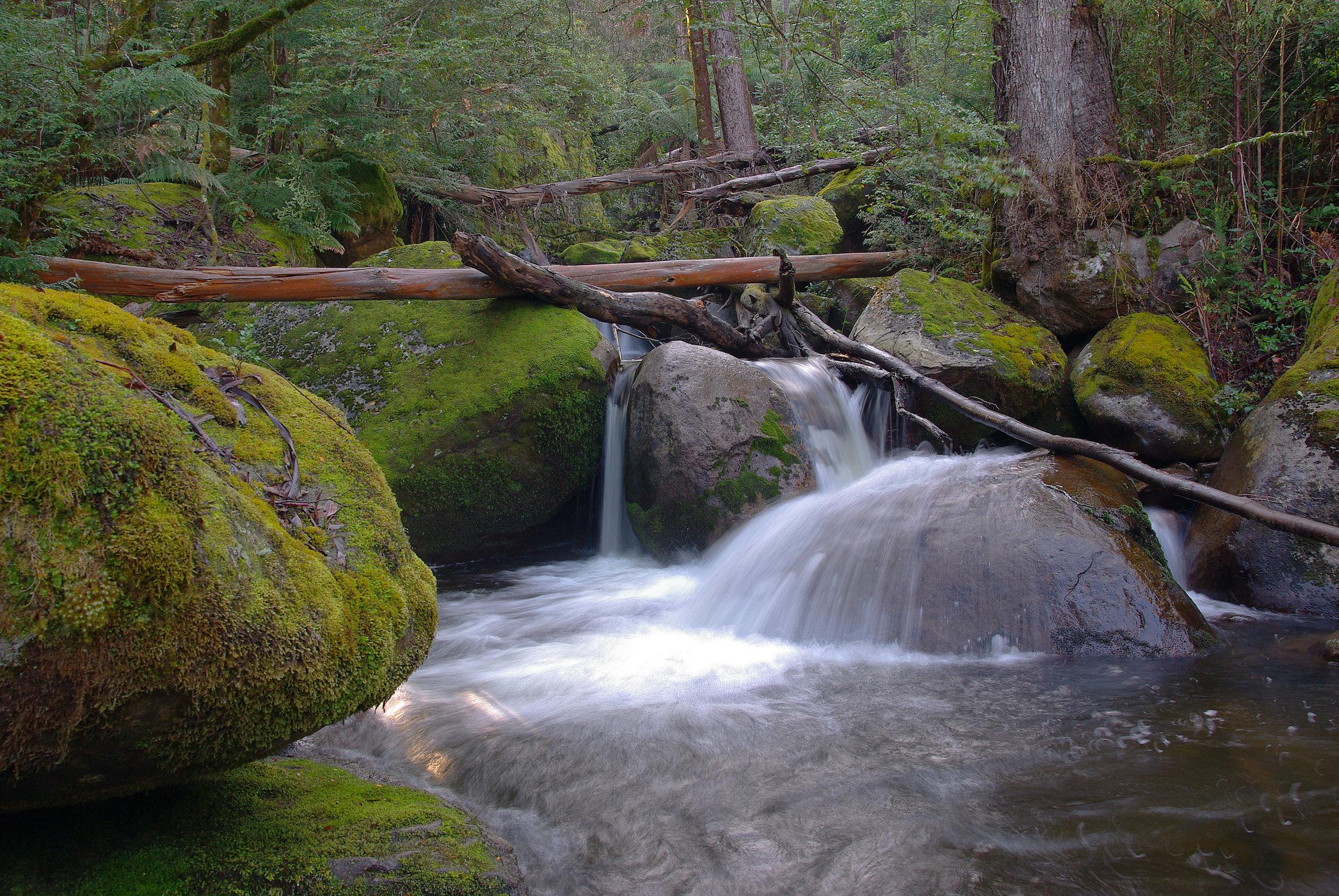Forest cascades.jpg
