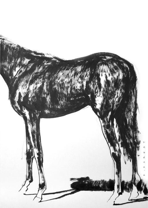 FForest_Drawing_Horse5.jpg