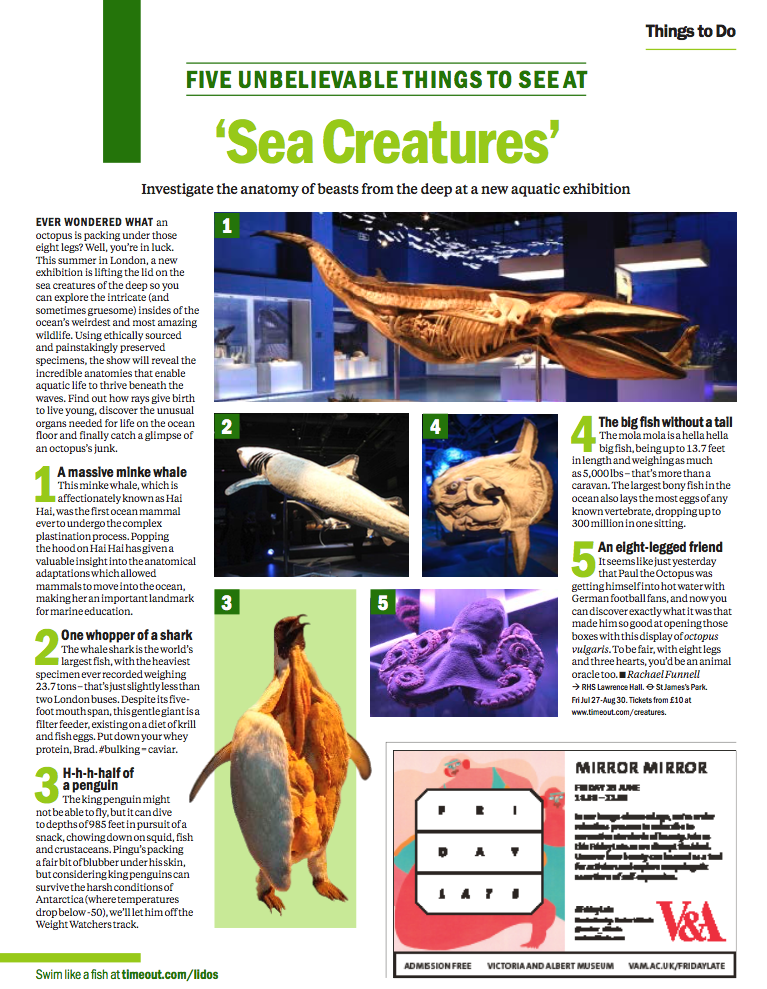 TimeOut sea creatures 2