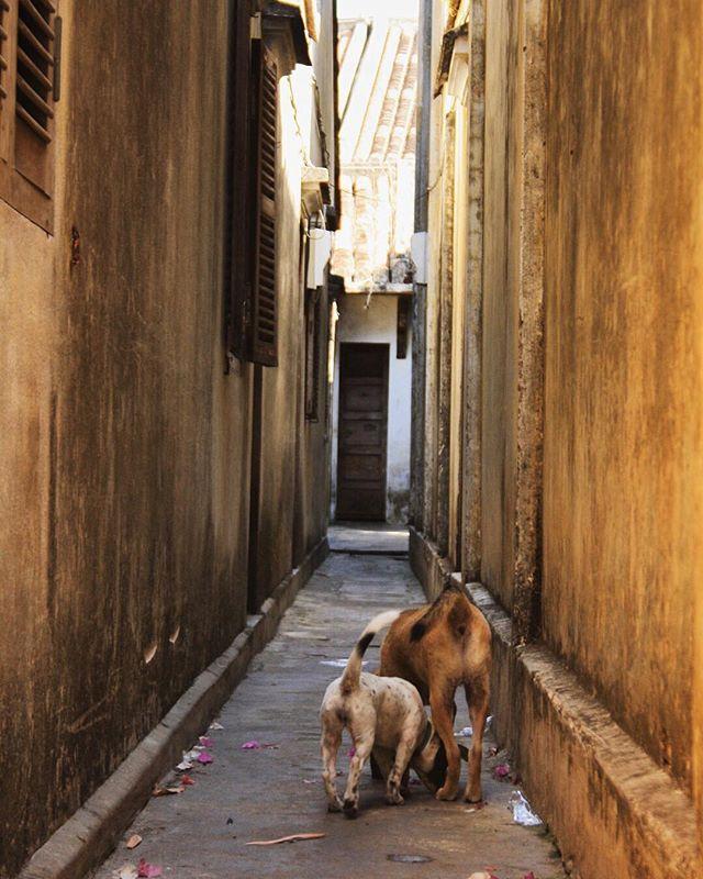 My kind of alleyway.
