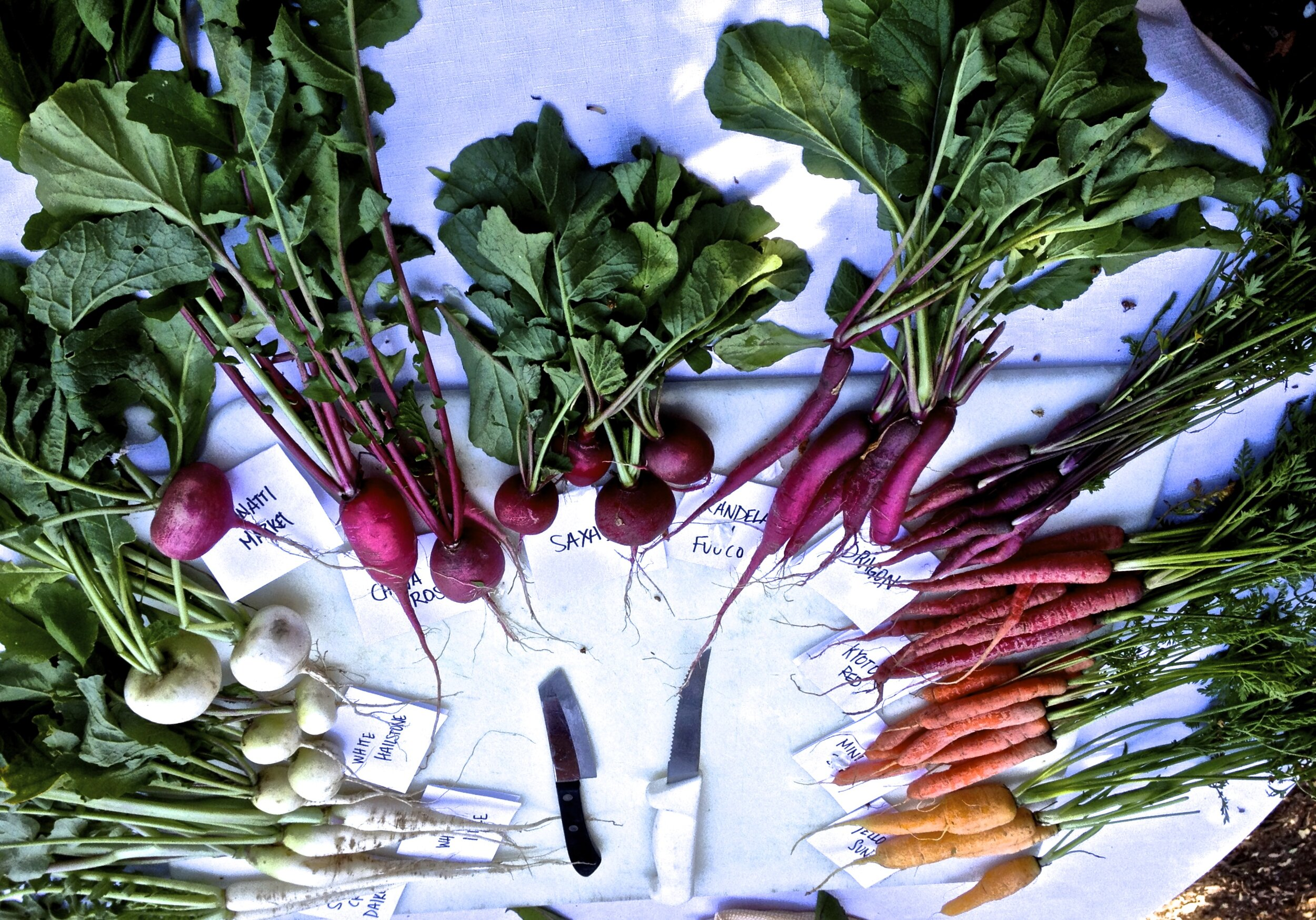 Carrots in all colors: Madison is a champion of fresh, local produce