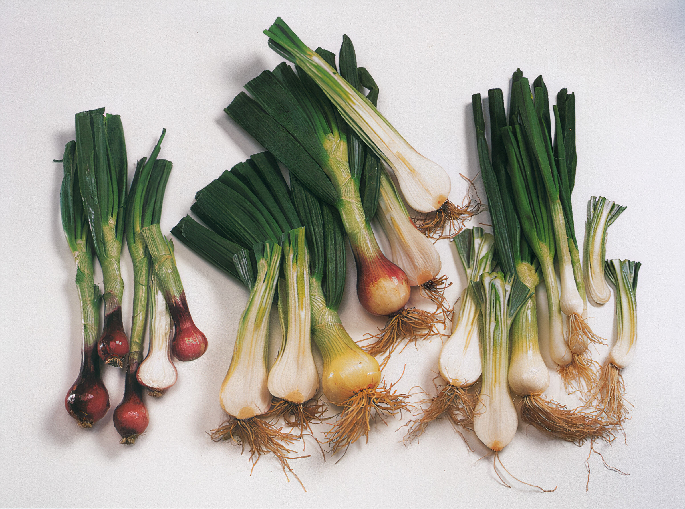 Different types of green onion. Photo: Amos Chan