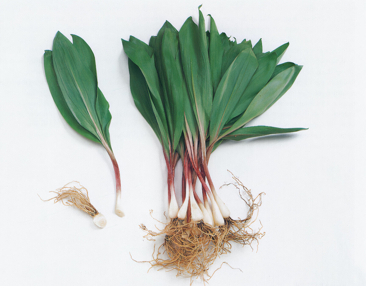 """Schneider on ramps: """"These native American leeks arrive in sophisticated city shops with the first garlicky breath of spring."""" Photo: Amos Chan"""