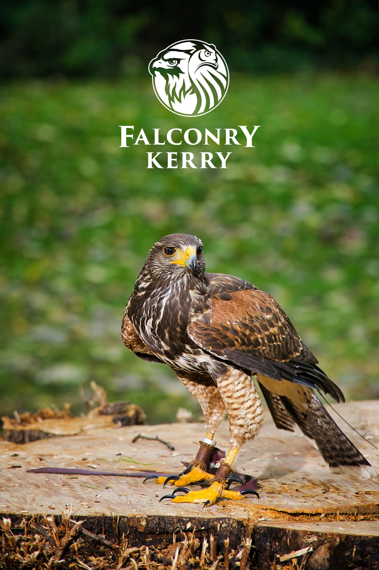 "- Come visit us for an exclusive falconry experience here in Killarney. Why not seize your opportunity to take part in ""the sport of kings"". This experience will open a whole new world into an ancient art, thought to be over 4000 years old.Falconry Kerry is located in Killarney, Co. Kerry. Based less than 2 miles from Killarney town centre. At Falconry Kerry, we keep several varieties of birds of prey including hawks, falcons and owls, with many species of each. All of these birds are captive reared and can only be owned by a licensed falconer.Traditionally, Falconry was practiced solely for hunting to catch food. While our birds do hunt, a hawk walk or falconry experience is more about experiencing the indescribable, while interacting with these majestic birds.At Falconry Kerry, you will be entertained and hopefully also educated about birds of prey all over the world, their importance in the ecosystem here in Killarney, and also throughout history, hunting together with humans.Call us or send an email to arrange an appointment, where you get a personal encounter with some of our birds. We fly our birds on a working, traditional Irish farm.Our Premises is not open to the public, private hawk walks/displays are arranged by contacting us to make an appointment."