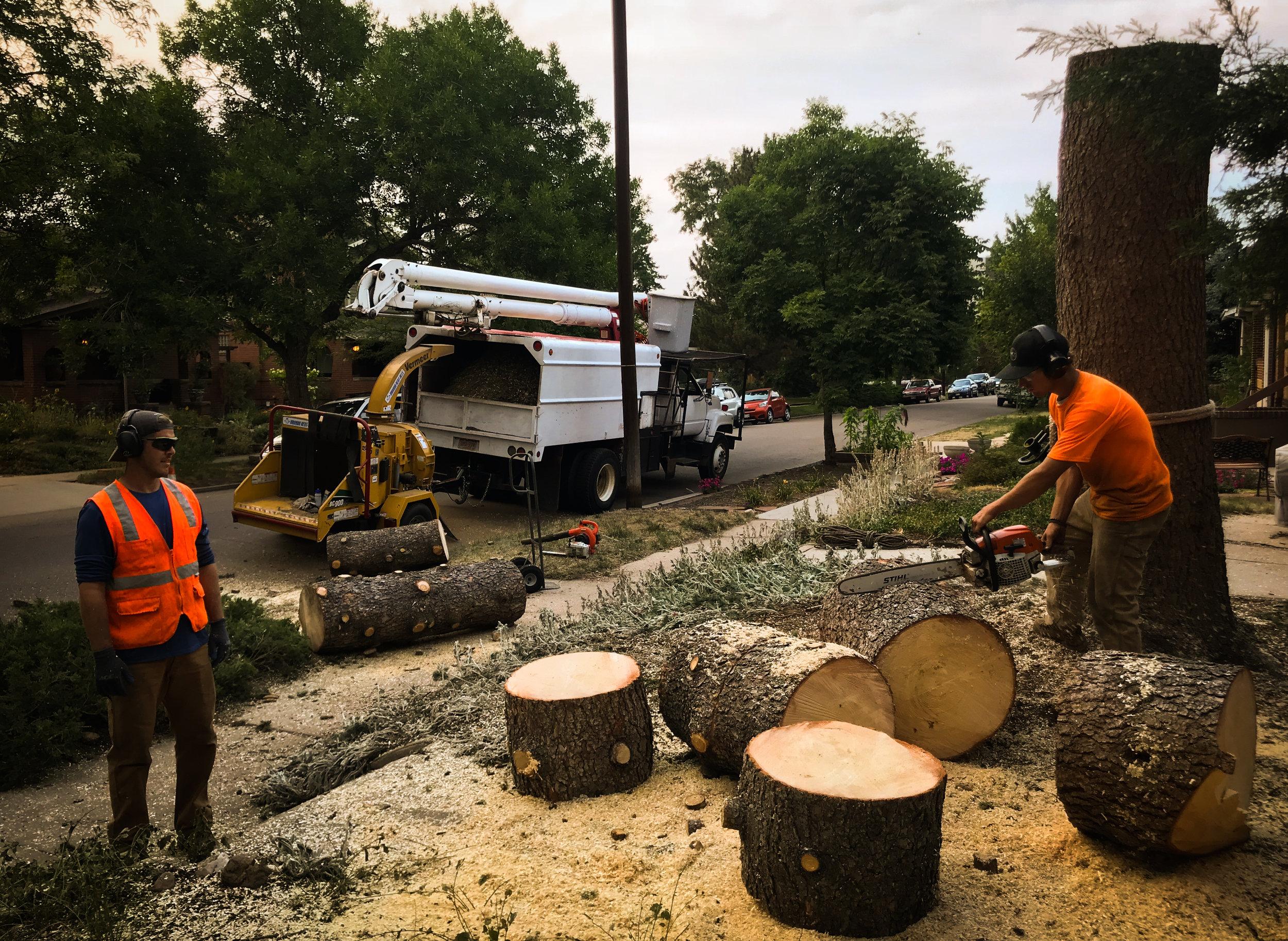 tree removals.jpg