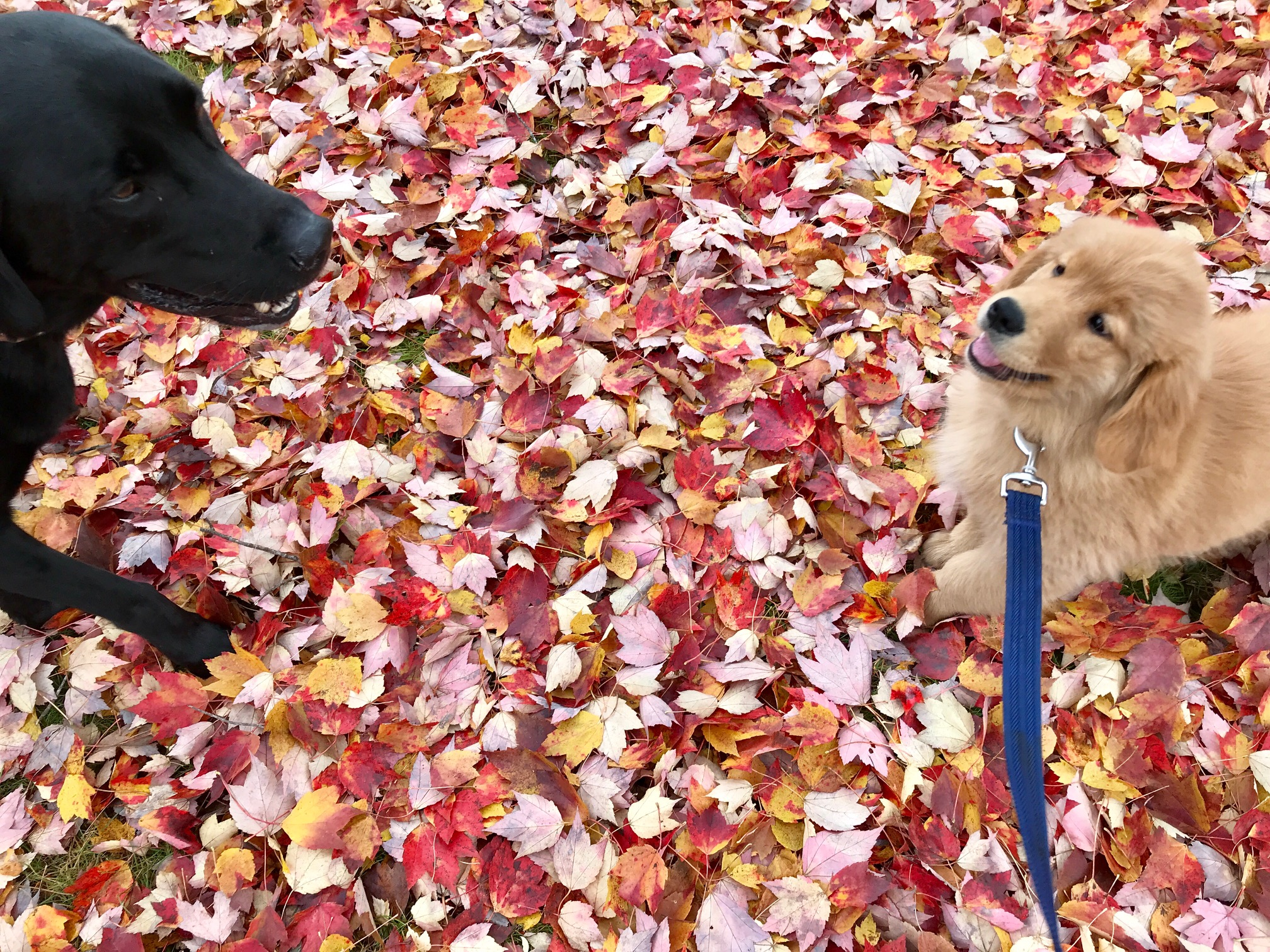 It's International Dog Day and Reviews.com recently named Concord a top city to visit with your dog. Here are some ideas for you and your best friend to have fun in New Hampshire's capital city whether you're driving through or staying in the area: