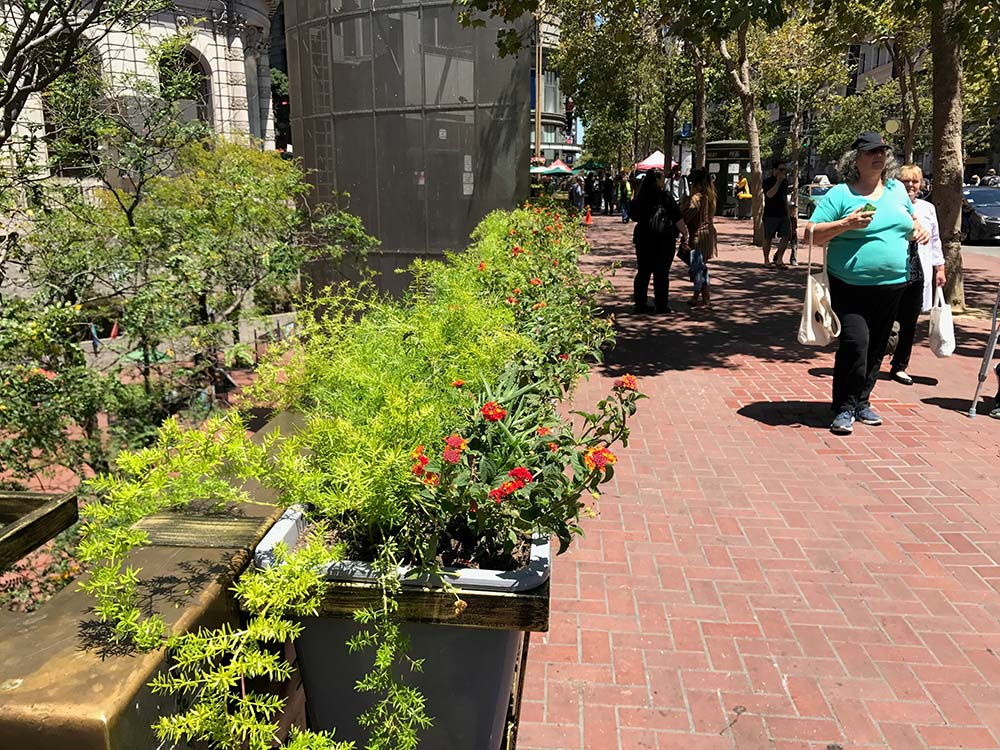 New-planters-at-Hallidie-Plaza.jpg