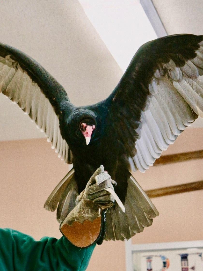 vulture+2+2.jpg