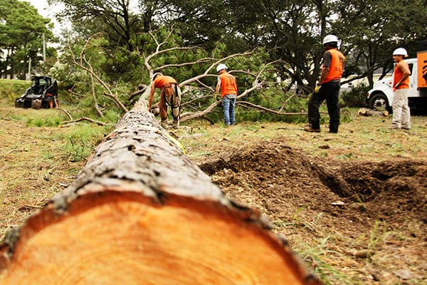 Tree Removal Service in Emergency Cases – Serendipidade
